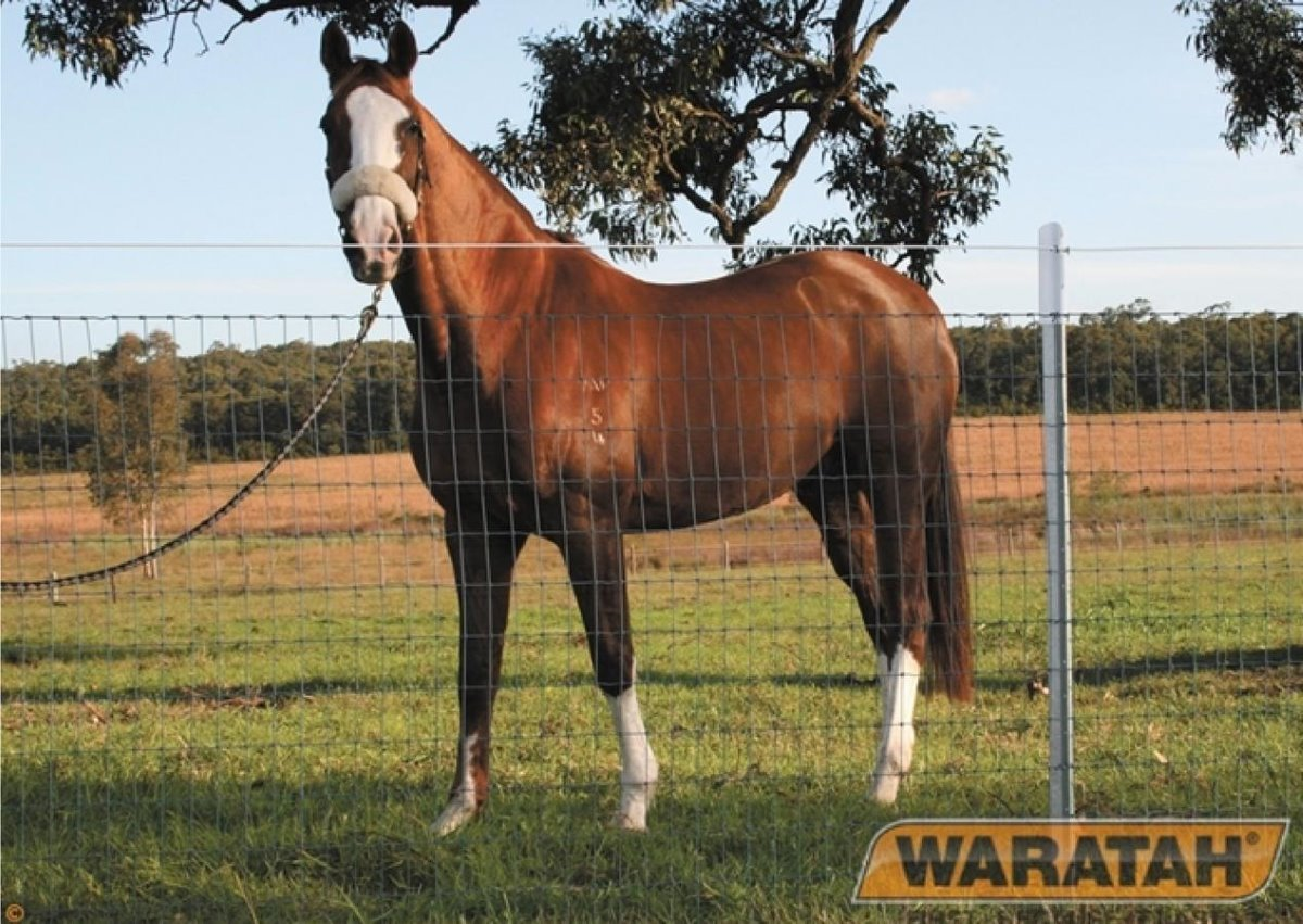 Horsesighter Wire | Waratah Specialised Fence Wire